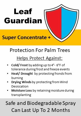 how-do-i-protect-palm-tree-during-winter-frost-weather-freezing-ice