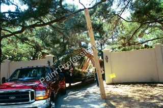 Professional Medjool Date Palm Tree Delivery and Installation By Experts In Houston, Texas