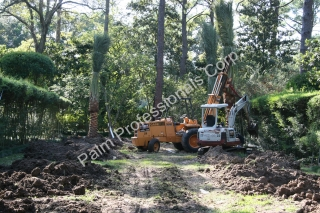 We Begin Installing The First Medjool Date Palm