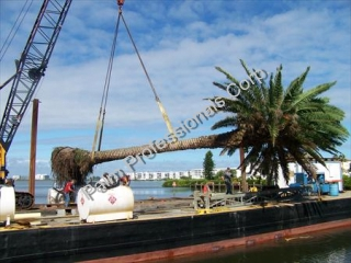 Hire A Palm Tree Specialist For Difficult Palm Tree Installations